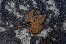 Decomposing Brown Tree Leaf On The Concrete In Autumn; Color Photo.