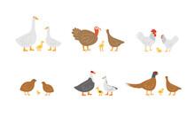 Set Farm Birds. Geese, Chicken And Turkeys