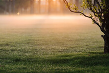 Spring Nature Background With Sun Beam. Green Landscape With Sunshine. Sunny Forest Early In The Morning. Morning Mist Over The Field