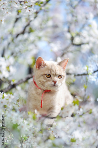Vertical picture of a kitten in the blooming tree - fototapety na wymiar