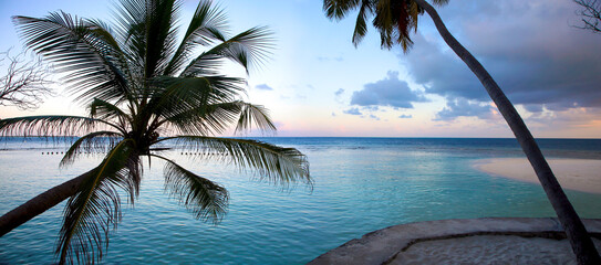 Coconuts with sunset in the Island of Embudu in the Maldives