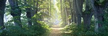 Single Lane Rural Gravel Road Through The Tall Green Linden Trees. Sunlight Flowing Through The Tree Trunks. Fairy Forest Scene. Art, Hope, Heaven, Wilderness, Loneliness, Pure Nature Concepts