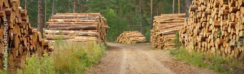 Canvas Print Freshly made firewood in the evergreen forest, pine tree logs close-up
