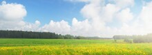 Blooming Green Forest Meadow Under A Cloudy Blue Sky. Yellow Wildflowers. Dramatic Cloudscape. Idyllic Rural Scene. Summer Landscape. Picturesque Panoramic Scenery