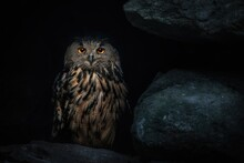 Eurasian Eagle-owl (Bubo Bubo) In Dark Cave, Eurasian Eagle Owl Sitting On Rock At Night And Looking At The Camera, Dark Background
