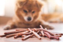 An Image Of Adorable Brown Dog Is Looking To A Pile Of Chew Snacks Stick On The Ground. Focus On Snacks.
