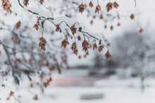 Selective Focus Shot Of Dry Tree Branches In Winter