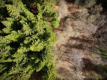 Photos From The Drone. Half Of The Photos Are Green And Live Forest. Half Of The Photo Is Dead And Dry Forest. Contrasts. Trees In The Forest