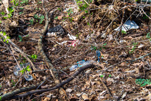 Litter On A Forest Floor.