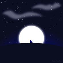 Cat At Night