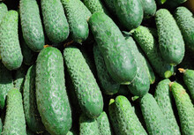 Photo Of Fresh Green Cucumbers With Minor Defects, Damages On The Market. Photo Vegetables Cucumbers. Poor Product Quality. Photo Processing.