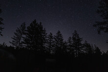 A Shooting Star Meteor Streaks Across A Night Sky Above Forest