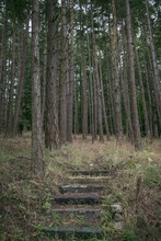 A Hidden Stair Path To Nowhere In A Secluded Forest