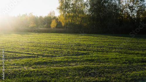 Łąka oświetlona promieniami słońca - fototapety na wymiar
