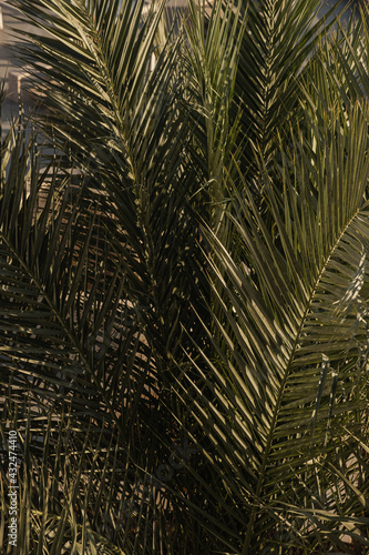 Coconut palm tree leaves. Beautiful summer exotic tropical nature background. Summer travel, vacation concept. - fototapety na wymiar