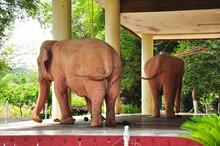 Royal White Elephant In Yangon, Myanmar Apr 2014.