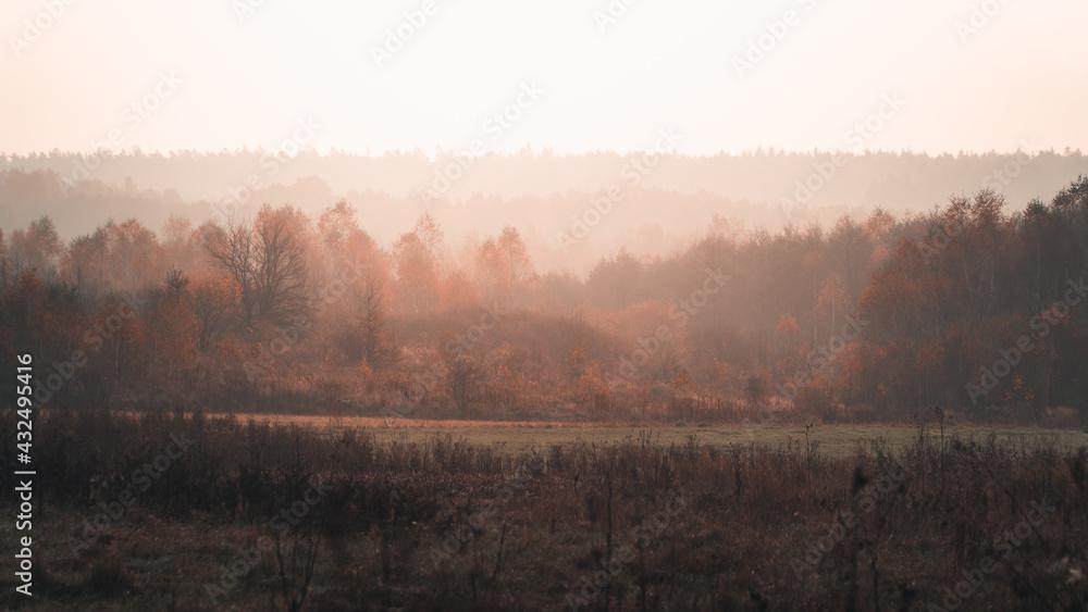 Mgła ponad lasem w promieniach wschodzącego słońca