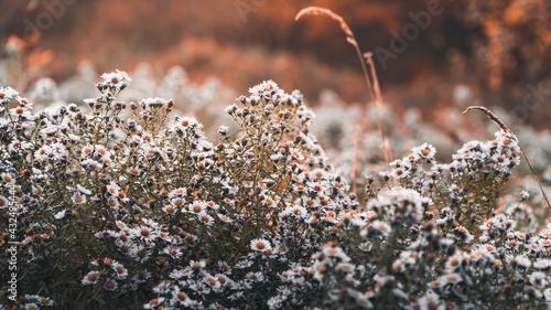 Kwiatki stanowiące naturalne tło - fototapety na wymiar
