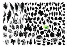 Set Of Tree Leaves. Vector Illustration