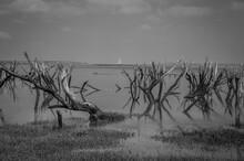 Bare Branches On Porlock Marsh