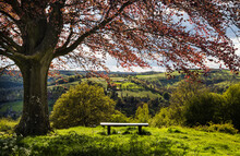 Spring View Of A Bench Under A Tree.