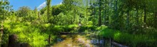 A Stunning Panoramic Shot Of Long Winding Brown Wooden Bridge Over Silky Brown Water In A Marsh Surrounded By Lush Green Trees And Plants With Blue Sky At Newman Wetlands Center In Hampton Georgia