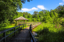 A Shot Of A Brown Wooden Bridge Over The Water In A Marsh Surrounded By Lush Green Trees And Plants Over Silky Brown Water With Blue Sky At Newman Wetlands Center In Hampton Georgia