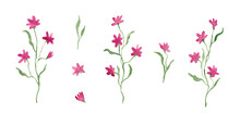 Little Pink Flowers, Watercolor Painting - Hand Drawn Blossom Isolated On White Background