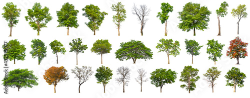 Fotografia isolated big tree collection isolated