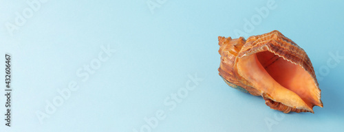 Fotografia Seashell on Beautiful Background by Color of Calm Sea or Ocean color