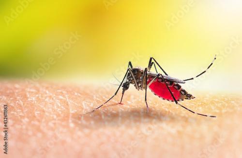 Aedes mosquitoe is sucking blood on human skin - fototapety na wymiar