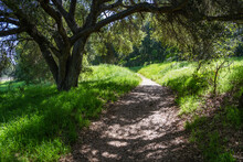 The Trail Passes Under A Tree In Southern California