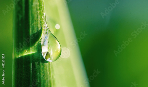 Beautiful water drop sparkle on a blade of grass in sunlight, macro. Big droplet of morning dew outdoor. Amazing artistic image of purity of nature. - fototapety na wymiar