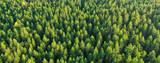 Fototapeta Kawa jest smaczna - summer forest top view drone, background green trees panorama landscape