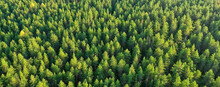 Summer Forest Top View Drone, Background Green Trees Panorama Landscape