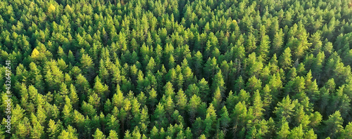 Fototapeta summer forest top view drone, background green trees panorama landscape obraz
