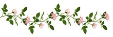 Rose Flowers And Leaves In A Linefloral Arrangement Isolated
