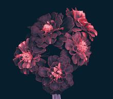 Garden Flowers, Bouquet, Petals With Pink Edges, Dark Background.