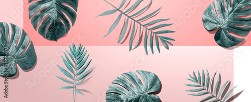 Tropical palm leaves from above - fototapety na wymiar