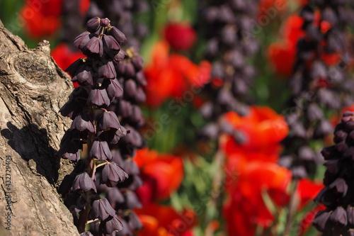 Obraz Fioletowy kwiat koło drzewa - fototapety do salonu