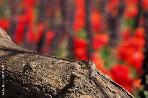 Fototapeta Drewno w makro zbliżeniu na rozmytym tle kwiatów obraz