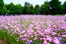 夏の幻想的なお花畑