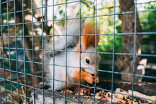 The Squirrel In The Zoo Behind The Cage Eats Seeds. Side View