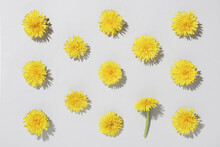 Pattern With Dandelion Flowers On A Grey Background Illuminated By Sunlight. Spring Minimal Concept Concept And Flat Lay..