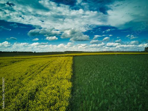 Rzepak - pole rzepaku - krajobraz  - fototapety na wymiar