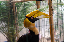 Beautiful Hornbill Sits In A Cage In A Zoo