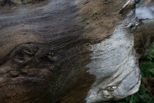 Wet Texture Of A Log On A Summer Day In The Rain