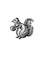Woodcut Illustration Of Squirrel