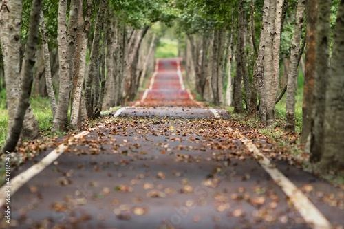 Billede på lærred camino