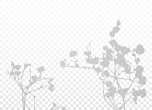 The Shadow Of The Branches With Small Flowers. Natural Lighting Vector Silhouette On Transparent Background. Gypsophila Plant. EPS10.